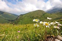 υψηλά βουνά λουλουδιών Στοκ εικόνα με δικαίωμα ελεύθερης χρήσης