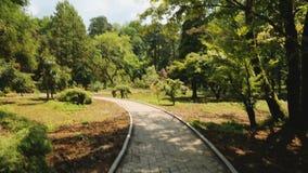 Υψηλά δέντρα του βοτανικού κήπου σε Batumi, πράσινα ορόσημα, οικολογικός τουρισμός απόθεμα βίντεο