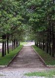 Υψηλή αψίδα δέντρων κατά μήκος του συγκεκριμένου τρόπου στοκ φωτογραφία