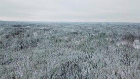 Υψηλή πετώντας κάμερα επάνω από τα μεγάλα ξύλα τον κρύο χειμώνα απόθεμα βίντεο
