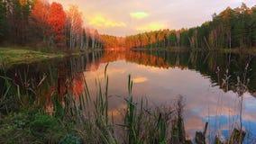 Υψηλός - ποιότητα timelapse, όμορφη δασική λίμνη στο μεγαλοπρεπές ηλιοβασίλεμα απόθεμα βίντεο