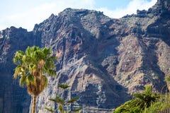 Υψηλός φοίνικας στο υπόβαθρο των απότομων βράχων Los Gigantes, Tenerife, Ισπανία arial όψη Στοκ Εικόνες