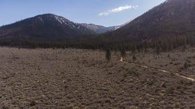 Υψηλό δέντρο βουνών βουρτσών κάδων ερήμων στοκ εικόνα