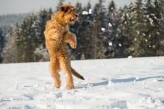 Υψηλό κουτάβι άλματος briard στο χιόνι Στοκ φωτογραφίες με δικαίωμα ελεύθερης χρήσης
