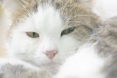υψηλό πλήκτρο γατών Στοκ φωτογραφία με δικαίωμα ελεύθερης χρήσης