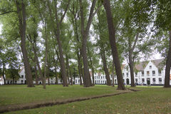 Υψηλά δέντρα στο προαύλιο του beguinage στη φλαμανδική πόλη Μπρυζ στο β Στοκ Εικόνα