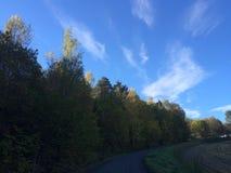 υψηλά δέντρα Στοκ εικόνα με δικαίωμα ελεύθερης χρήσης