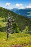 Υψηλά βουνά φυσικά με το ξηρό δέντρο στο πρώτο πλάνο Αυστρία, Tirol, υψηλός δρόμος Zillertal Στοκ φωτογραφία με δικαίωμα ελεύθερης χρήσης