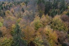Υψηλή γωνία που πυροβολείται του μαύρου δάσους Στοκ Φωτογραφίες