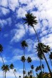Υψηλοί φοίνικες, μπλε ουρανός και άσπρα σύννεφα Στοκ φωτογραφία με δικαίωμα ελεύθερης χρήσης