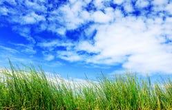 Υψηλοί χλόη και μπλε ουρανός με τα άσπρα σύννεφα Στοκ Φωτογραφίες