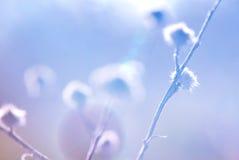 Υψηλός βασικός αφηρημένος κάρδος Στοκ εικόνα με δικαίωμα ελεύθερης χρήσης