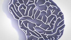 Υψηλός καθορισμός ζωτικότητας λαβυρίνθου εγκεφάλου διανυσματική απεικόνιση
