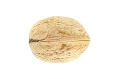 Υψηλός - ποιοτική εικόνα του ξύλου καρυδιάς που απομονώνεται μακρο στο λευκό Στοκ Εικόνες