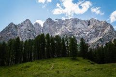 Υψηλό βουνό πέρα από τα δέντρα και τη χλόη. Στοκ Εικόνα