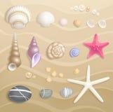 Υψηλό λεπτομερές σύνολο θαλασσινών κοχυλιών Απεικόνιση αποθεμάτων