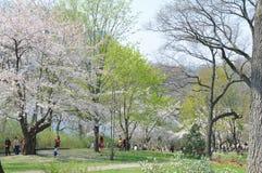 Υψηλό πάρκο στοκ φωτογραφία με δικαίωμα ελεύθερης χρήσης