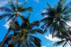 Υψωμένος φοίνικες ενάντια στο μπλε ουρανό Στοκ φωτογραφία με δικαίωμα ελεύθερης χρήσης