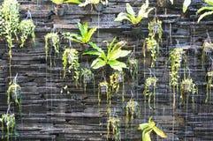 Υδατώδης κάθετος κήπος στοκ εικόνες με δικαίωμα ελεύθερης χρήσης