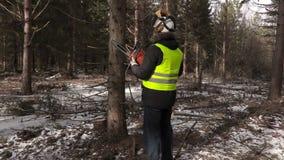 Υλοτόμος με το αλυσιδοπρίονο που ελέγχει το δέντρο στο δάσος απόθεμα βίντεο