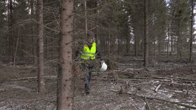 Υλοτόμος με το αλυσιδοπρίονο που περπατά στο δάσος απόθεμα βίντεο