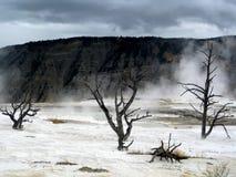 Υδρατμός και σύννεφα πέρα από τα νεκρά δέντρα σε Yellowstone Στοκ φωτογραφίες με δικαίωμα ελεύθερης χρήσης