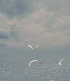 Υδρονέφωση θάλασσας Στοκ εικόνες με δικαίωμα ελεύθερης χρήσης