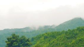 Υδρονέφωση και ομίχλη μεταξύ του τροπικού τροπικού δάσους απόθεμα βίντεο