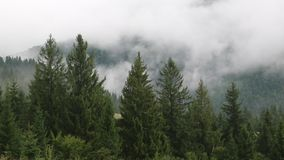 Υδρονέφωση μεταξύ των πράσινων δέντρων απόθεμα βίντεο