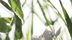 Υδρονέφωση νερού και ανθίζοντας κήπος απόθεμα βίντεο