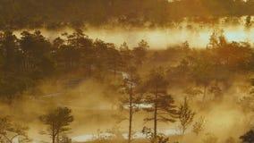 Υδρονέφωση που αυξάνεται από ένα δάσος υγρότοπου φιλμ μικρού μήκους