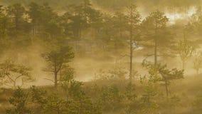 Υδρονέφωση που αυξάνεται από ένα δάσος υγρότοπου απόθεμα βίντεο