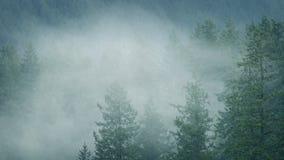 Υδρονέφωση που κινείται μέσω του άγριου δάσους στις βροχοπτώσεις φιλμ μικρού μήκους