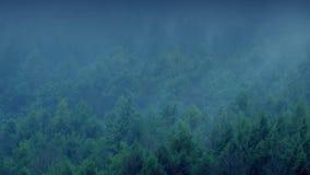 Υδρονέφωση που κυλά το δάσος το βράδυ απόθεμα βίντεο