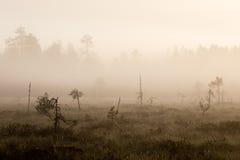 Υδρονέφωση πρωινού Στοκ Εικόνες