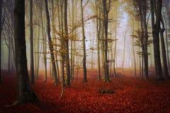 Υδρονέφωση στο δάσος Στοκ φωτογραφία με δικαίωμα ελεύθερης χρήσης