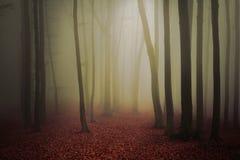 Υδρονέφωση στο δάσος Στοκ Φωτογραφία