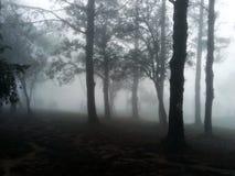 Υδρονέφωση στο δάσος στοκ εικόνα με δικαίωμα ελεύθερης χρήσης