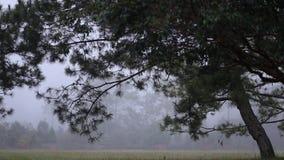 Υδρονέφωση το πρωί στο εθνικό πάρκο Phu Kradueng, επαρχία Loei, Ταϊλάνδη φιλμ μικρού μήκους