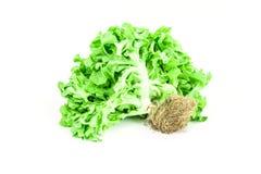 Υδροπονικά λαχανικά Στοκ φωτογραφία με δικαίωμα ελεύθερης χρήσης