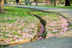 Υδρορροή στον κήπο στοκ εικόνα με δικαίωμα ελεύθερης χρήσης