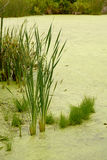 Υδρόβια βλάστηση στοκ φωτογραφίες