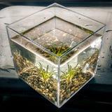 Υδρόβιες εγκαταστάσεις σε έναν κύβο νερού Στοκ εικόνα με δικαίωμα ελεύθερης χρήσης