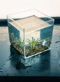 Υδρόβιες εγκαταστάσεις σε έναν κύβο νερού Στοκ φωτογραφία με δικαίωμα ελεύθερης χρήσης