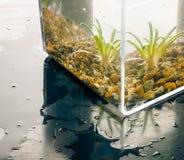 Υδρόβιες εγκαταστάσεις σε έναν κύβο νερού Στοκ Εικόνες