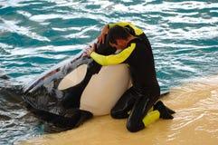 φάλαινα ατόμων δολοφόνων Στοκ Εικόνα