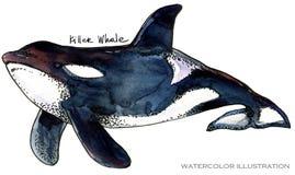 Φάλαινα δολοφόνων υποβρύχια απεικόνιση watercolor ζωής η ζωική όμορφη θαμπάδα ανασκόπησης χρωματίζει τη octpous θάλασσα χταποδιών Στοκ Εικόνα