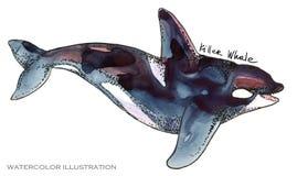 Φάλαινα δολοφόνων υποβρύχια απεικόνιση watercolor ζωής η ζωική όμορφη θαμπάδα ανασκόπησης χρωματίζει τη octpous θάλασσα χταποδιών Στοκ εικόνα με δικαίωμα ελεύθερης χρήσης