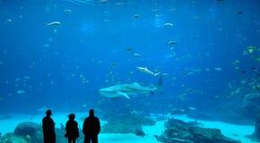 φάλαινα καρχαριών Στοκ φωτογραφία με δικαίωμα ελεύθερης χρήσης