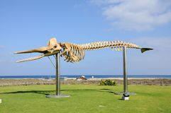 φάλαινα σκελετών fuerteventura Στοκ Εικόνες
